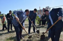 Grigol Nemsadze participated in the greenery action
