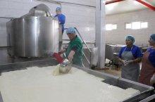 რძის გადამამუშავებელი საწარმოს მონახულება სოფელ გუმბათში